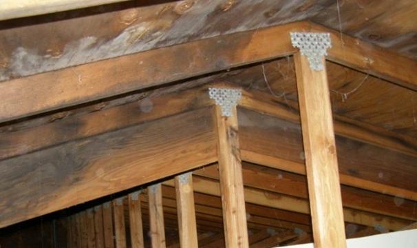 Craig cooper mold inspection sciences attic mold solutioingenieria Image collections